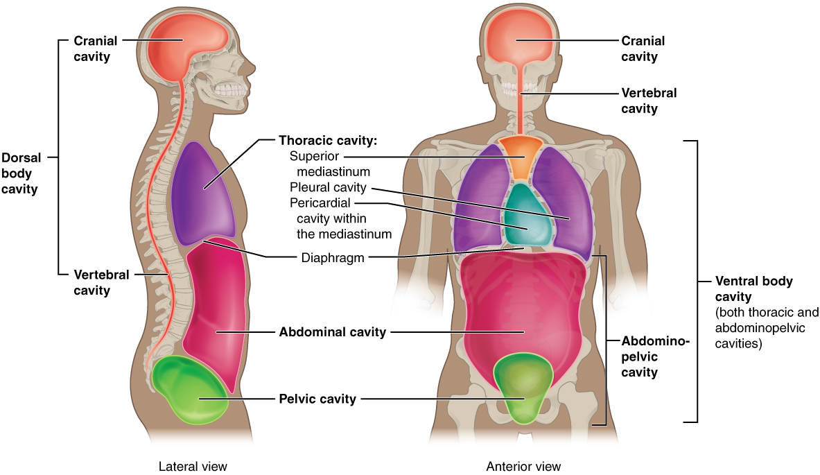 Anatomical Terminology · Anatomy and Physiology