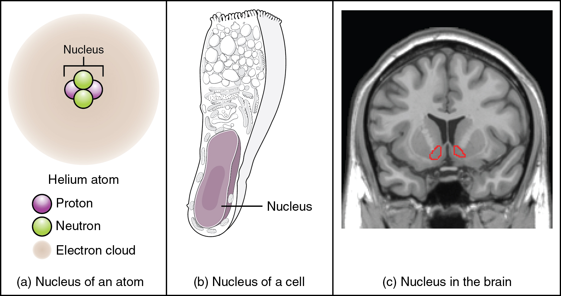 Basic structure and function of the nervous system anatomy and this figure shows two diagrams and a photo labeled a b and c ccuart Images