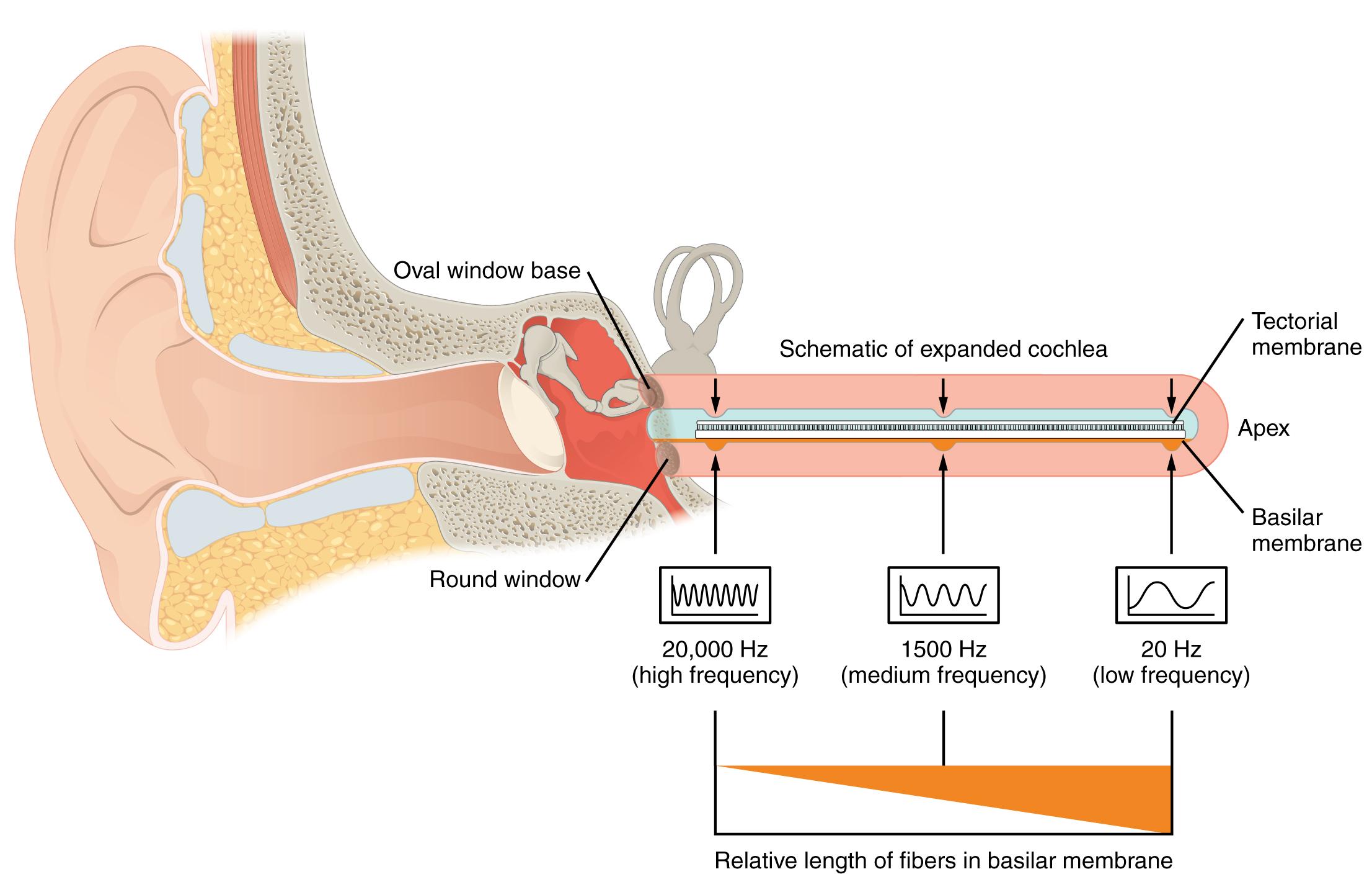 Sensory Perception · Anatomy and Physiology