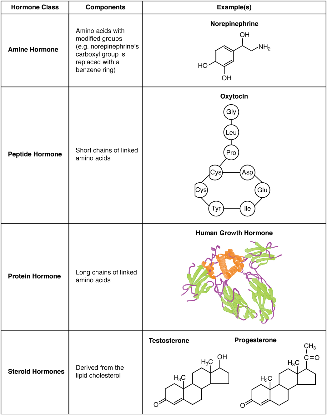 Hormones · Anatomy and Physiology