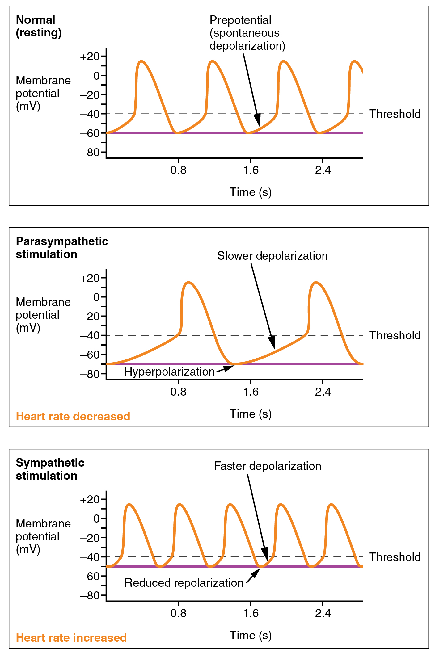 Cardiac Physiology · Anatomy and Physiology