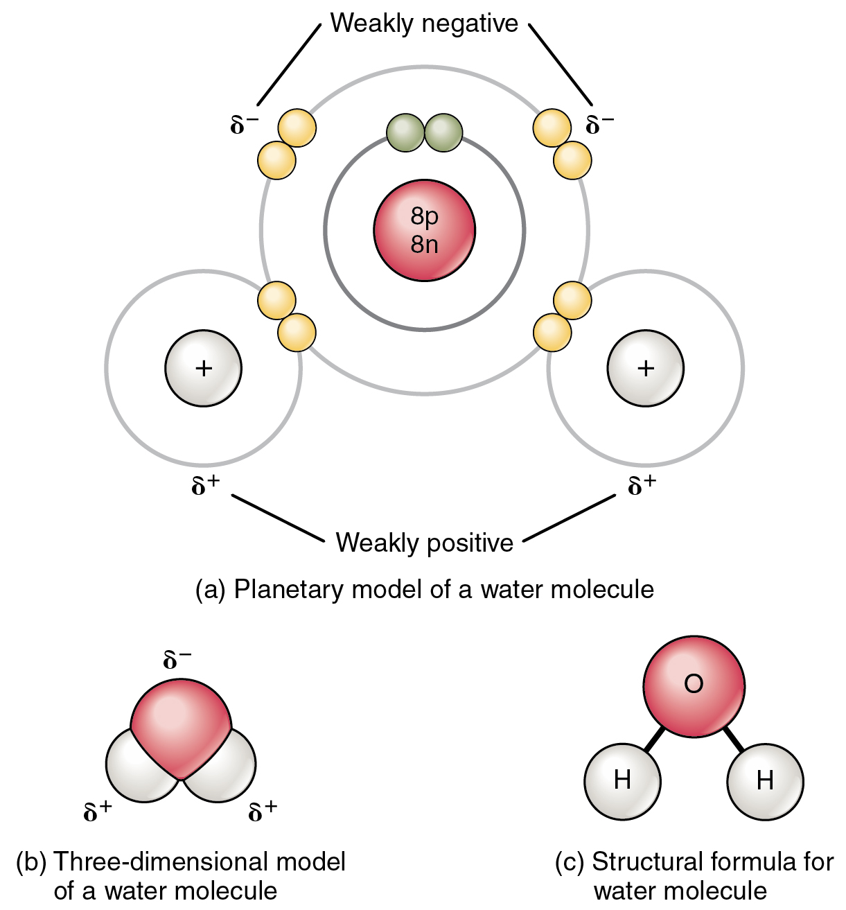 Gallery images and information single covalent bond vs double