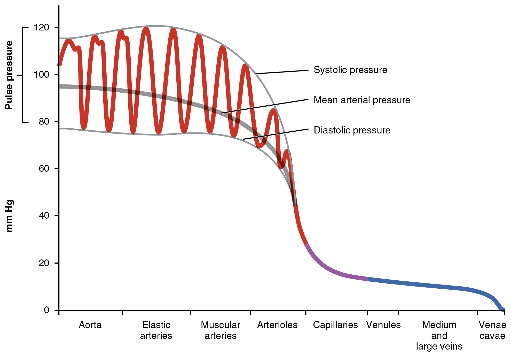 Blood Flow, Blood Pressure, and Resistance · Anatomy and Physiology