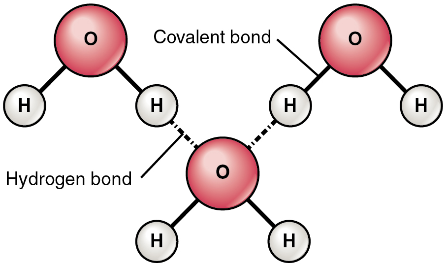 Hydrogen bonds in water article  Khan Academy