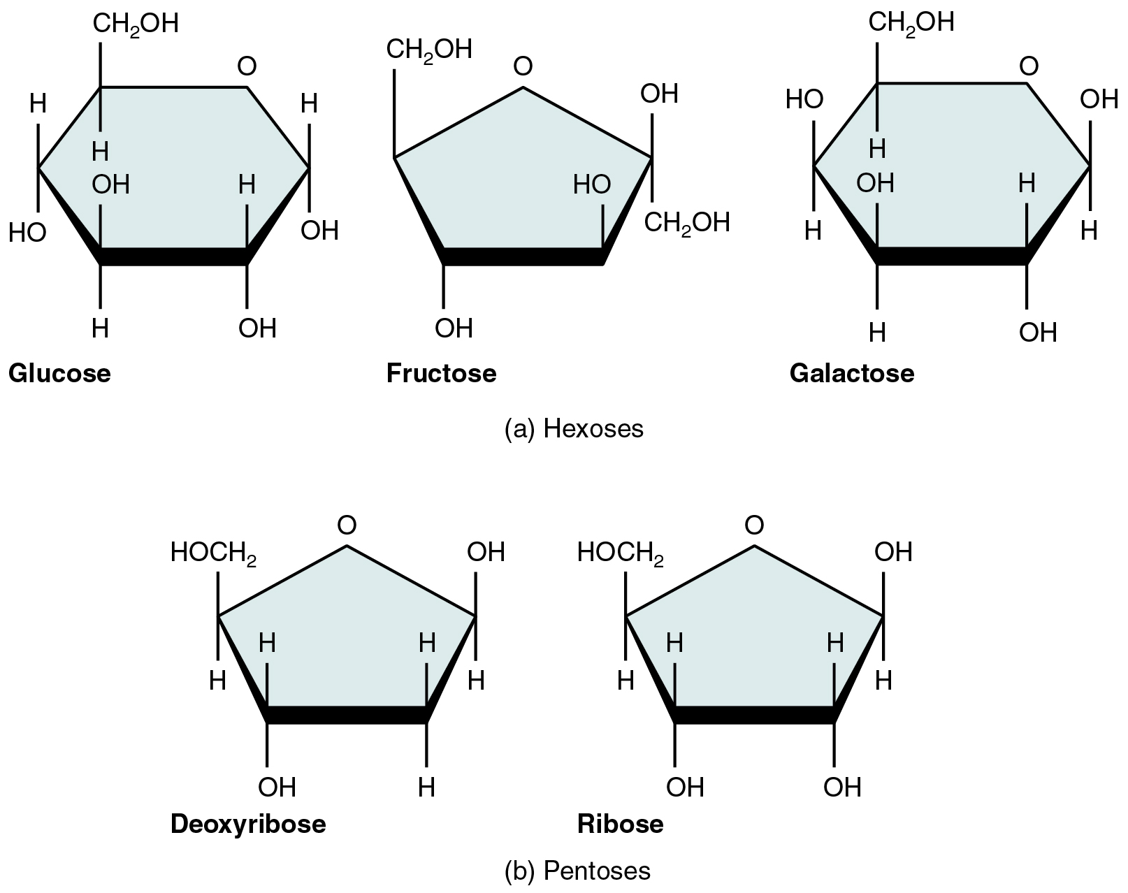 Galactose Structure Diagram the structure of glucose