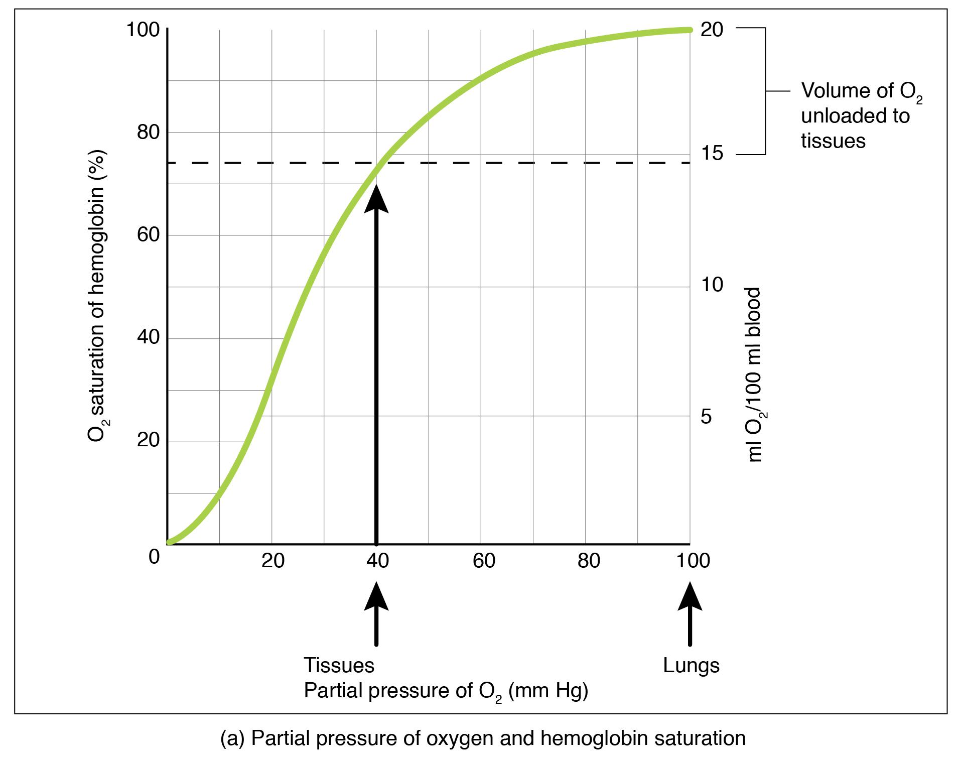 Sauerstoff-Hämoglobin-Dissoziation und Auswirkungen von pH-Wert und Temperatur