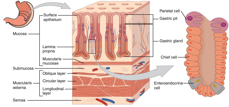 Nature Made Digestive Probiotics Advanced Dual Support