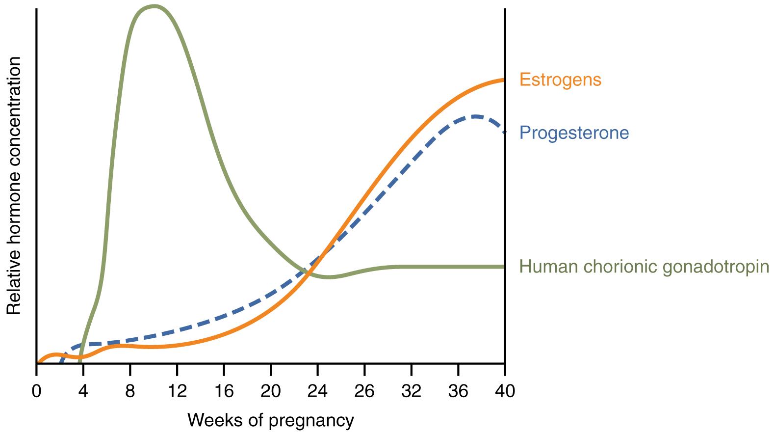Pregnant Hormone 23