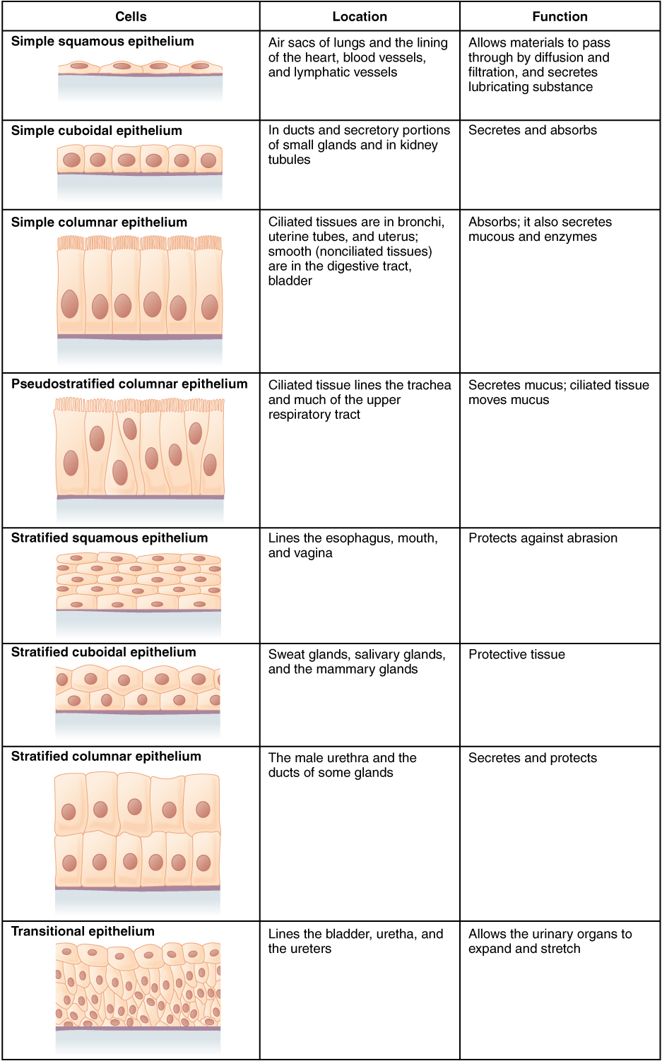 types of human tissues