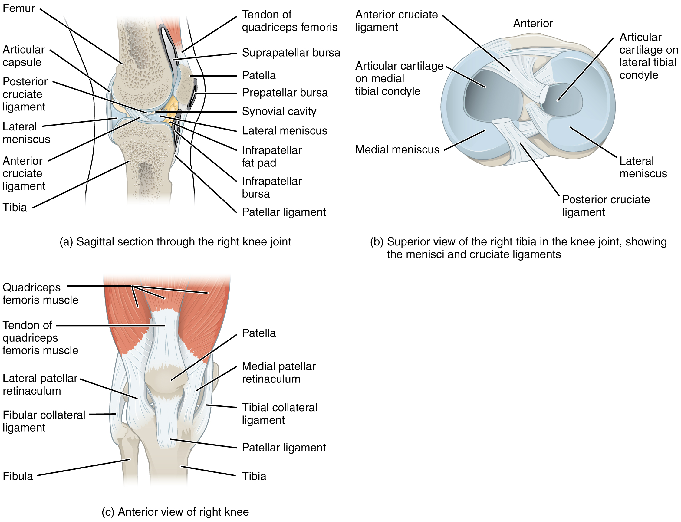 This image shows the different views of the knee joint the top left panel