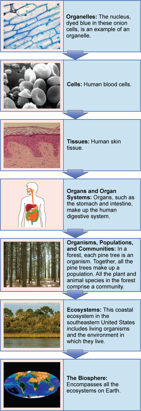 Themes And Concepts Of Biology Biology