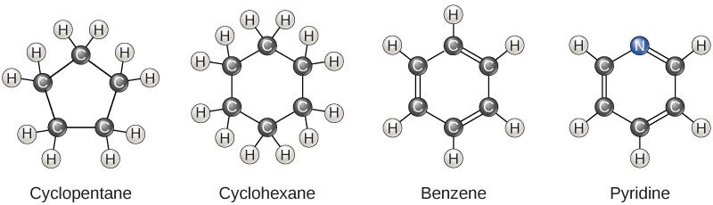 Carbon · Biology