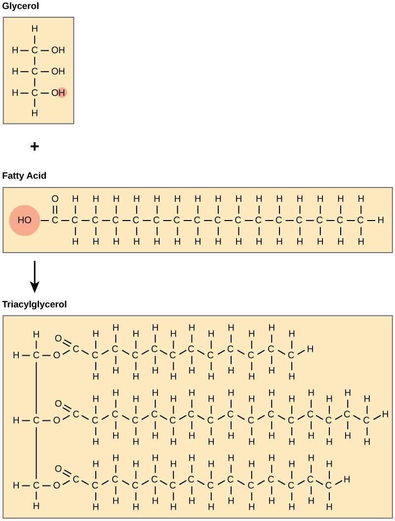 Lipids  Biology