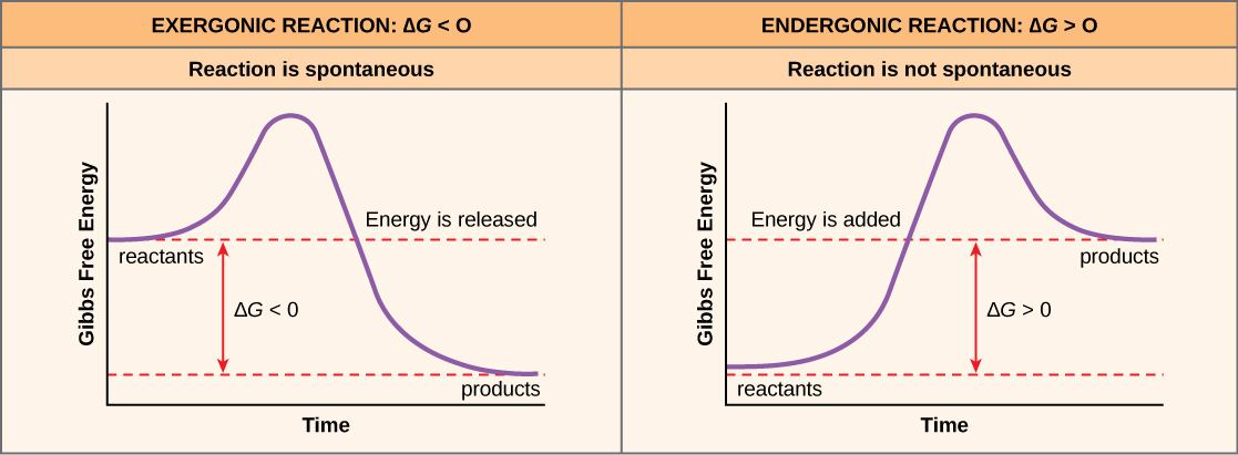 compare anabolic and catabolic reactions in terms of their energetics