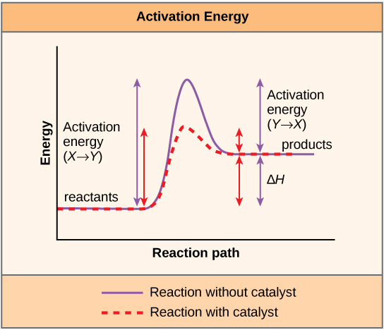 catabolic state anabolic state