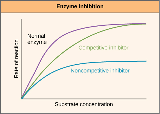 Inhibition and Inactivation of Enzymes