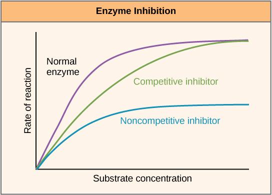 bestehen enzyme aus proteinen
