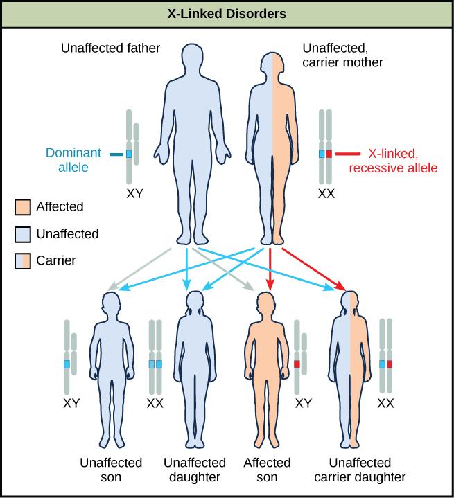 Characteristics And Traits 183 Biology
