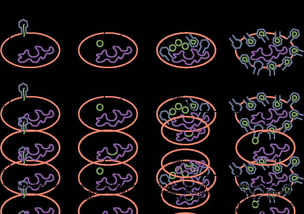 virus infections and hosts  u00b7 biology
