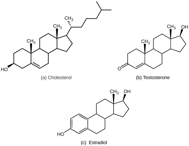 types of hormones  u00b7 biology