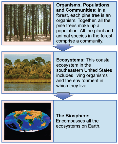44.1: The Scope of Ecology - Biology LibreTexts