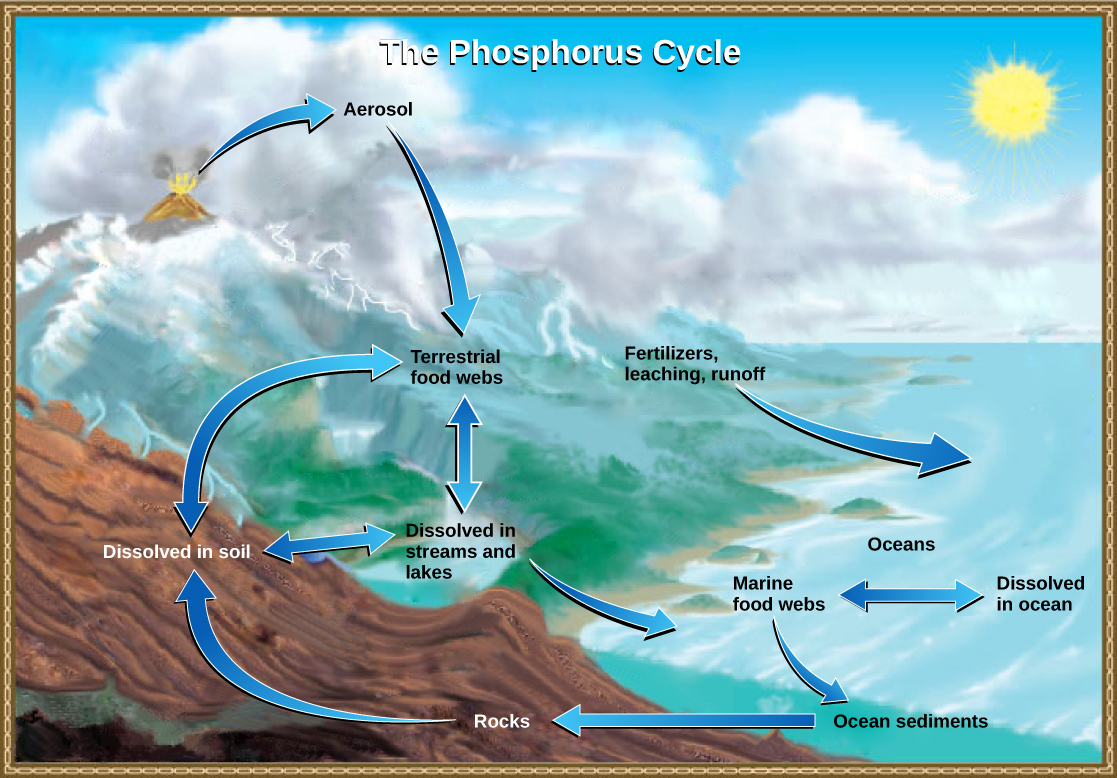 What Is The Nature Of Thr Water Cycle Water Is