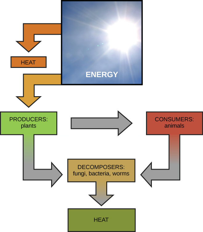Image Width   Height   Version together with Water Cycle together with Figure further Solar Energy Science Powerpoint Template Title likewise Px Angiosperm Life Cycle Diagram Svg. on energy transformation diagrams examples