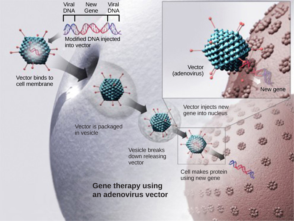 the science of gene therapy and its use in medicine