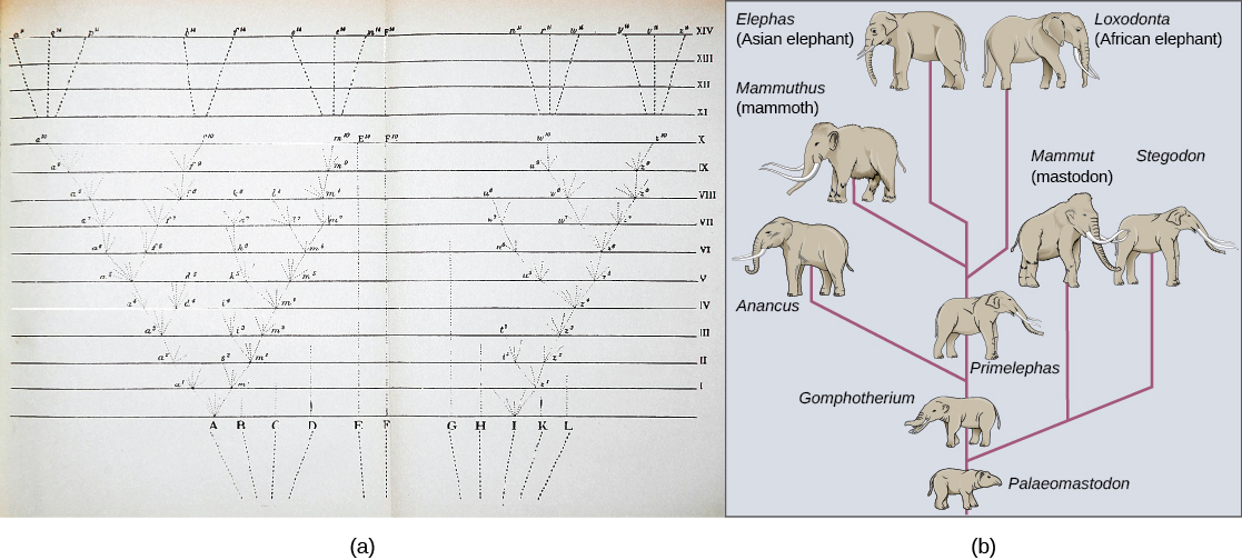 Speciation concepts of biology photo a shows a yellowed piece of paper with evenly spaced horizontal lines numbered ccuart Image collections