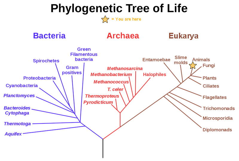 Organizing Life On Earth Concepts Of Biology