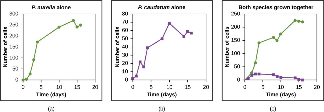 p aurelia and p caudatum