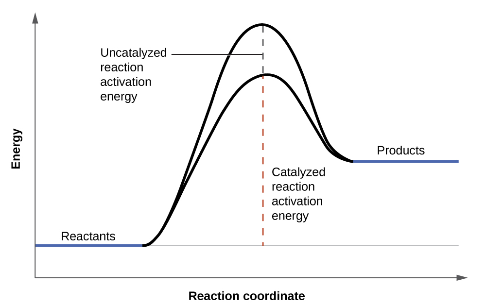 Factors Affecting Reaction Rates 183 Chemistry