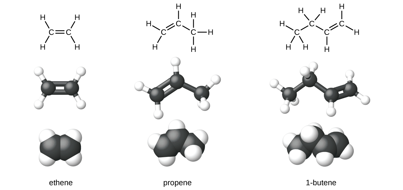 Hydrocarbons chemistry expanded structures ball and stick structures and space filling models for the alkenes ethene propene and 1 butene are shown biocorpaavc Image collections