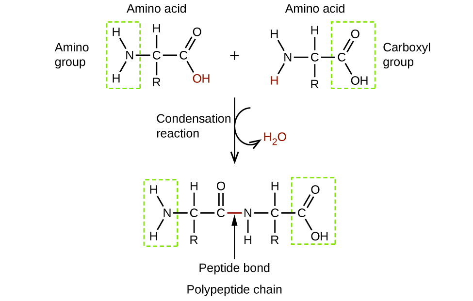 Amines and Amides · Chemistry