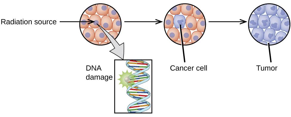 Biological Effects Of Radiation  U00b7 Chemistry