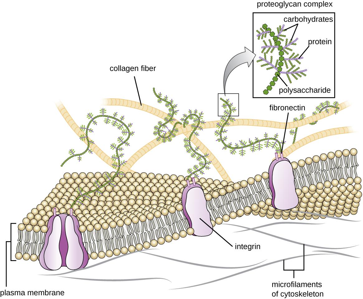 Unique Characteristics of Eukaryotic Cells