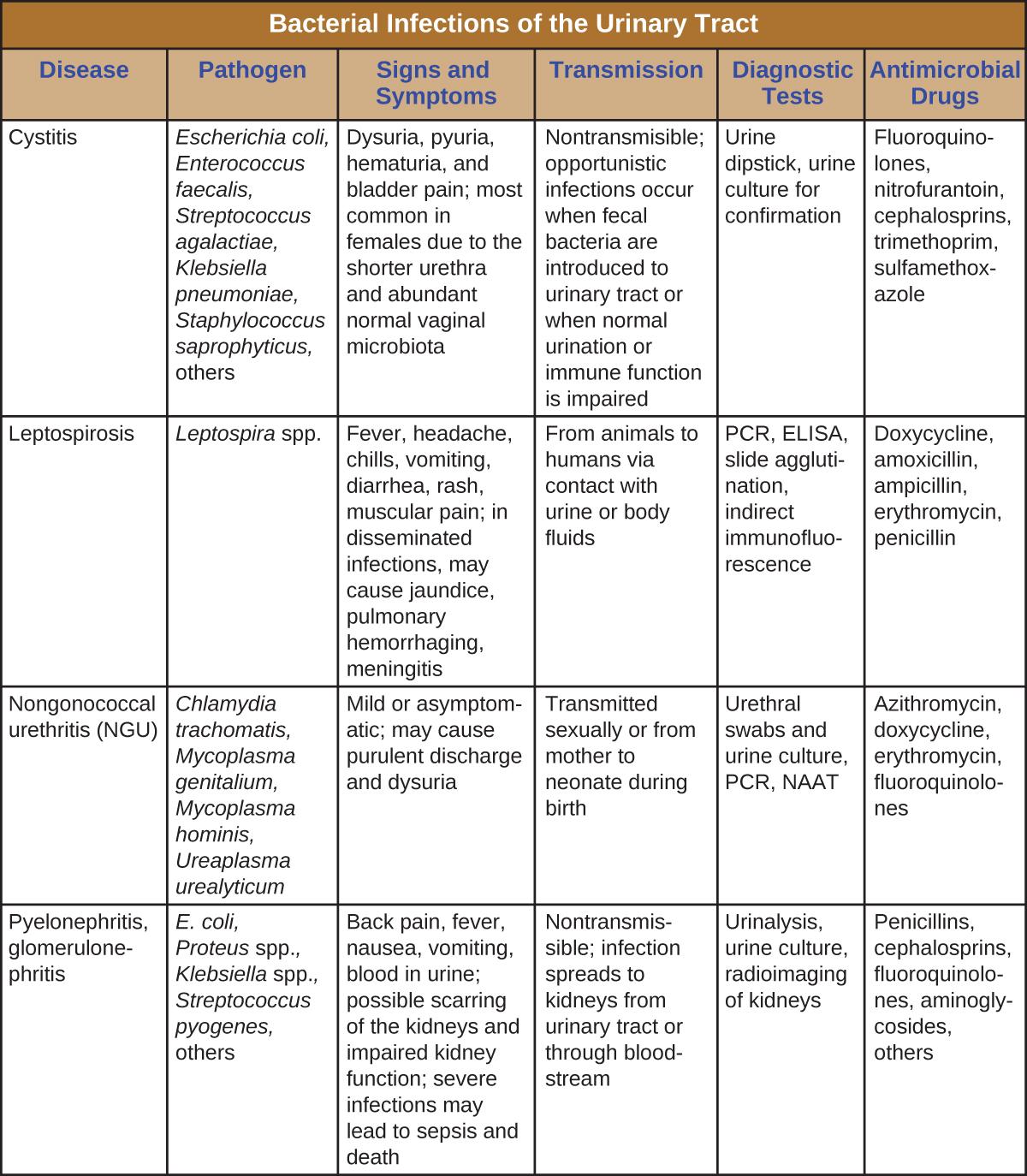 Le rôle du viagra