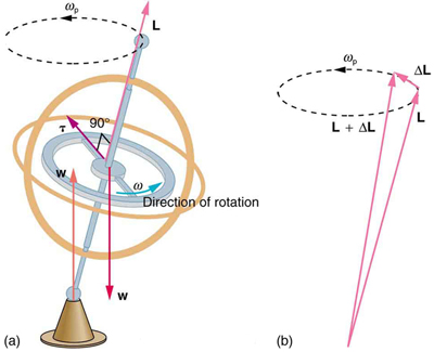 Gyroscopic effects vector aspects of angular momentum physics in figure a the gyroscope is rotating in counter clockwise direction the weight of ccuart Images