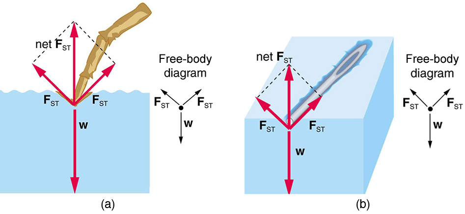 Cohesion And Adhesion In Liquids Surface Tension And Capillary