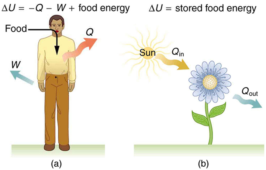 role of energy in the body with examples A carbohydrate is an organic compound in living tissues and food that can be broken down into energy by people or animals see some examples of carbohydrates here see some examples of carbohydrates here.