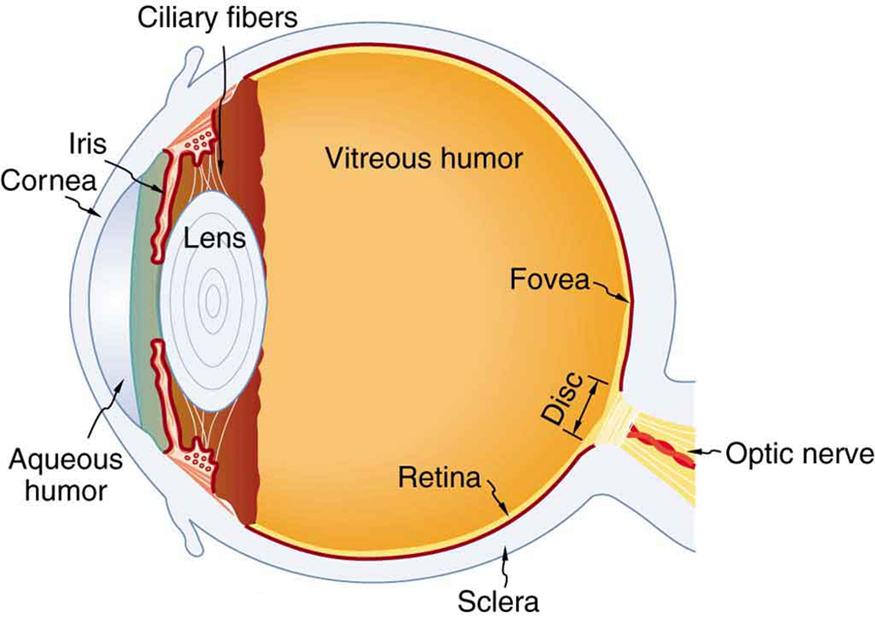 Physics Of The Eye  U00b7 Physics