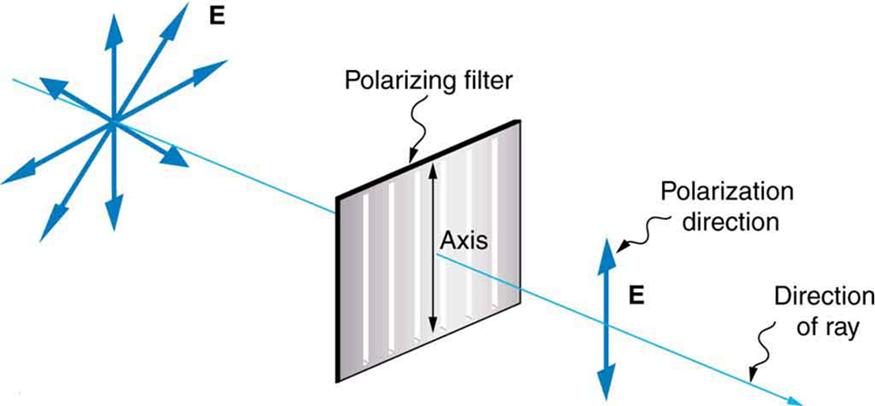 Polarization · Physics